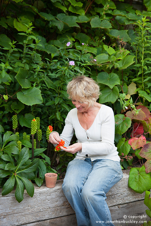 Carol Klein collecting seeds from Arum italicum 'Pictum' syn  A. italicum subsp. italicum 'Marmoratum' - Lords and ladies