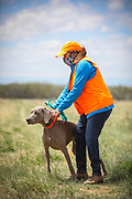 SHOT 5/9/20 1:29:02 PM - Various pointing breeds compete in the Vizsla Club of Colorado Licensed Hunt Test Premium at the Rocky Mountain Sporting Dog Club Grounds in Keenesburg, Co. (Photo by Marc Piscotty / © 2020)