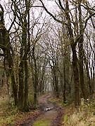 Bosgebied bij Rabbinge, Zuidwolde in Drenthe - Woodland in The Netherlands