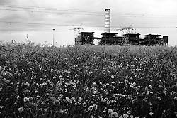 """Brindisi - cerano. campo di papaveri con la centrale a carbone """"federico II"""" sullo sfondo"""