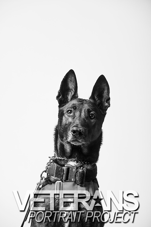 Bono<br /> Air Force<br /> K9<br /> Security Forces, K9<br /> Present<br /> <br /> Veterans Portrait Project<br /> 802d Security Forces Squadron<br /> San Antonio, TX