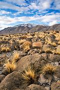 Grasses below the Wassuk Range, BLM Lands, Mineral County, Nevada