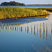 Blackwater National Wildlife Refuge is a waterfowl sanctuary for birds migrating along the critical migration highway called the Atlantic Flyway. Blackwater Refuge is located on Maryland's scenic Eastern Shore, just south of Cambridge.