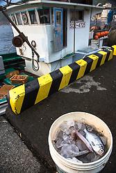 A fisherman's harvest at Heda Port on the Izu Peninsula, Japan