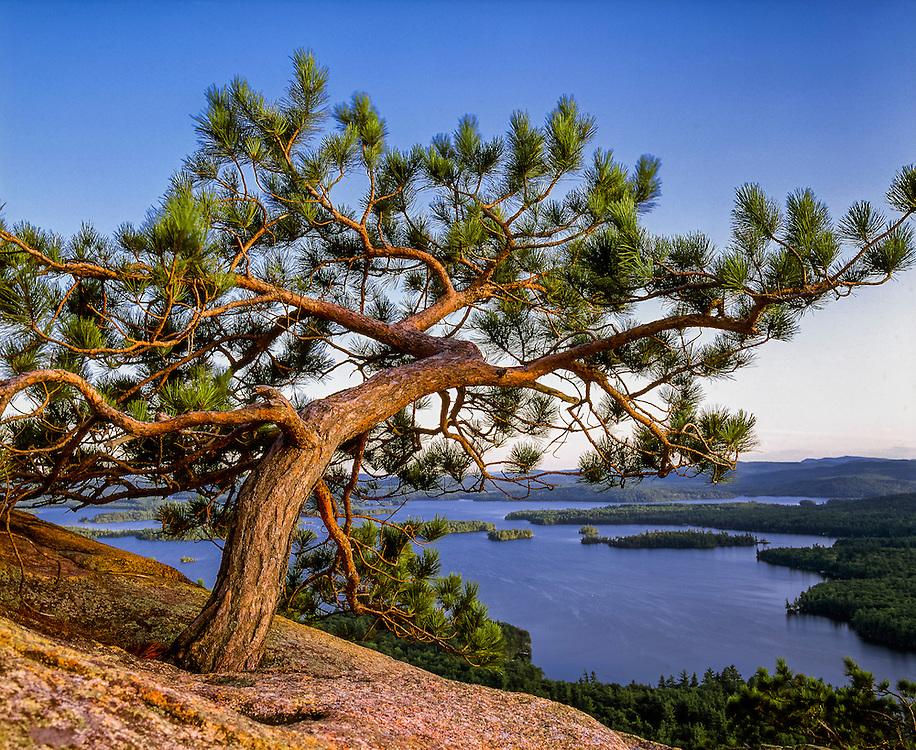 Red pine & Squam Lake, Rattlesnake Mountain, summer, Holderness, NH