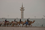 QT 113 camel race in Qatar