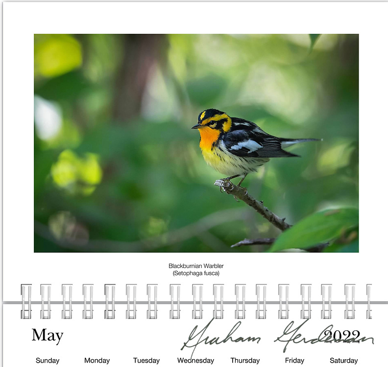 """2022 Birds of Tennessee Calendar<br /> _____<br /> <br /> Featuring 12 months of birds of the great state of Tennessee. All of the birds depicted are either Summer or Winter residents in Tennessee, or are at least annual migrants in Spring and Fall. <br /> <br /> Cost is $20 plus shipping and handling. <br /> <br /> At least 50% of the profits of this annual calendar will go to the B.I.R.D. Research program at Warner Park Nature Center in Nashville, funded through Friends of Warner Parks, a 501(c)(3) nonprofit organization (warnerparks.org).<br /> <br /> Currently also available locally in Nashville at the Wood Thrush Shop and Shelby Bottoms Nature Center, in conjunction with my """"Our Vanishing Birds"""" photo exhibit on display there."""
