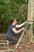 Woman checking Remote Camera Trap, Panama, Central America, Barro Colorado Island