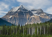 Aspen trees at Mount Robson (3954 meters or 12,972 feet in the Rainbow Range), whose summit is the highest point in the Canadian Rockies. Mount Robson Provincial Park (in British Columbia, Canada) is part of the Canadian Rocky Mountain Parks World Heritage Site honored by UNESCO in 1984.