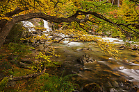 Autumn color along a river in Los Glaciares National Park, Argentina
