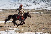 Kazakh eagle hunter with his golden eagle (Aquila chrysaetos) galloping on horseback, Altai Mountains, Bayan Ulgii, Mongolia