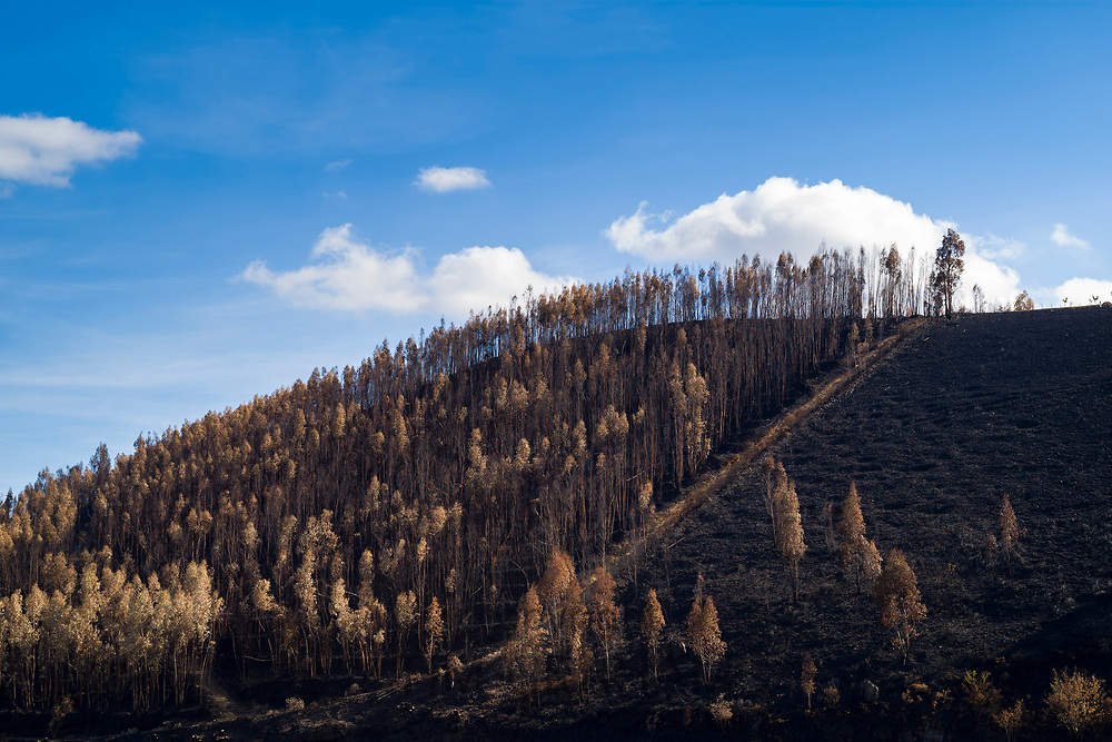 Serra do Marao mountain range and fire damaged burnt trees on mountain slope after the wildfire of 2017 in Portugal.