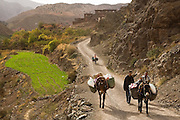 People and mules, loaded down with supplies bought at the weekly market, travel down the dirt road from the town of Abachkou in the M'Goun Massif, Central High Atlas, Morocco.