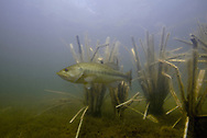Fishiding Artificial Fish Structure<br />