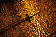 Rower silhouetted on a lake.