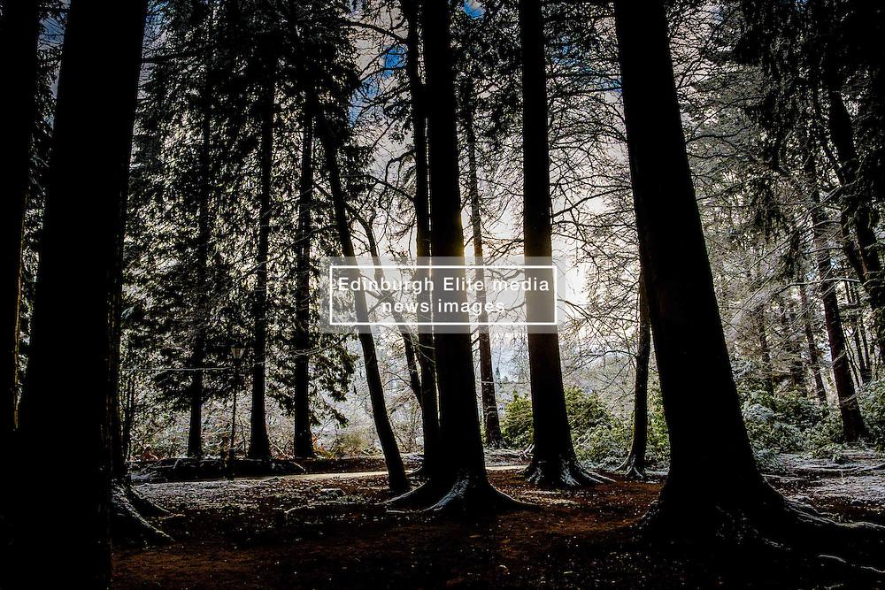 Woodland near the River Ness in Inverness, Scotland<br /> <br /> (c) Andrew Wilson   Edinburgh Elite media
