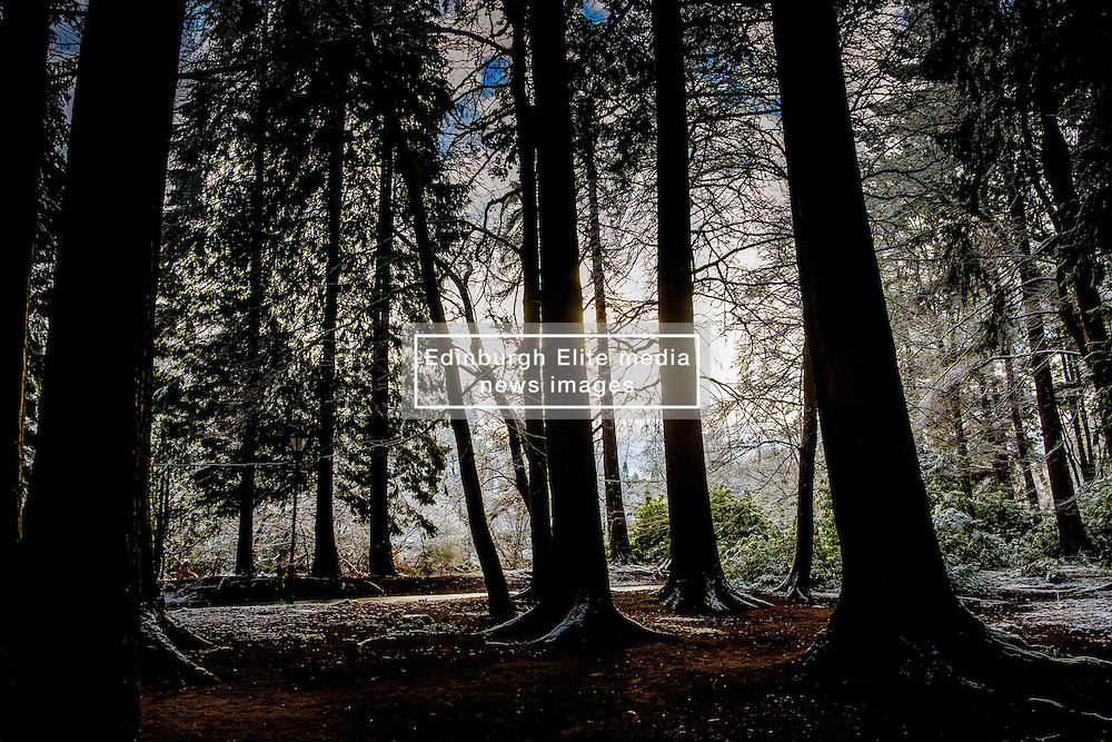 Woodland near the River Ness in Inverness, Scotland<br /> <br /> (c) Andrew Wilson | Edinburgh Elite media
