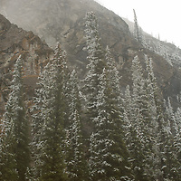 An early snowfall dusts a forest in Alberta , Canada's Banff National Park.