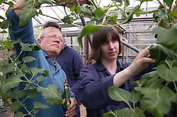 Workers with learning disabilities at work at Brook Farm; Linby; tending plants in greenhouse,