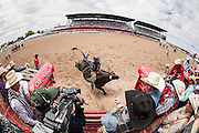 Bull Riding action from behind the chutes at Cheyenne Frontier Days on July 19, 2015.