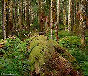 A down log stretches across the forest floor.