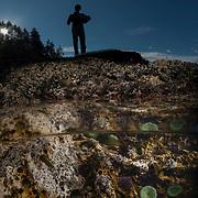 Dr. Keith Lombardo recording intertidal survey data at sunrise; Giant green sea anemones (Anthopleura xanthogrammica) Olympic National Park, Washington, USA © Michael Ready
