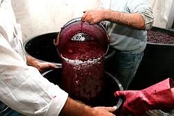 Il travaso del mosto con evidente contenuto di vinaccioli e bucce viene messo a riposo per poi iniziare la fermentazione.