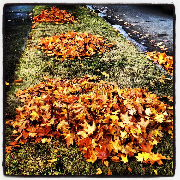 2012 October 25 - Raked maple leaves in piles near a sidewalk in a neighborhood in West Seattle, WA, USA. Taken/edited with Instagram App for iPhone. By Richard Walker