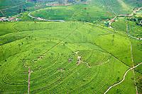 Sri Lanka, province de l'Uva, Haputale, Lipton's Seat, plantations de thé // Sri Lanka, Ceylon, Central Province, Haputale, tea plantation in the Highlands near Lipton's seat