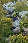 Small stream running through wildflowers (Mimulus sp.) in an alpine meadow, John Muir Wilderness, Inyo National Forest, California