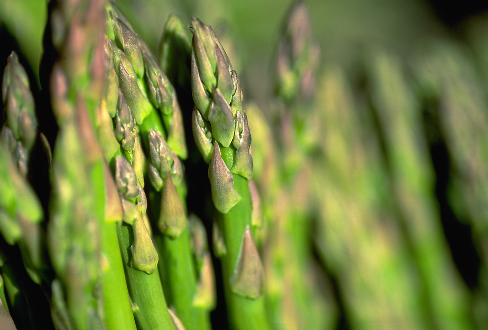 Close up selective focus photo of Asparagus Spears