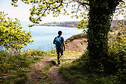Man walking on the cliff paths and under the trees on the north coast of Jersey CI, taking in the views across the ocean and coastline.