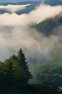 Morning coastal fog over forest and hills near the mouth of the Klamath River, Redwood National Park, California