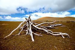 Devastation Trail and Pu`u Pua`i cinder cone, Kilauea, Hawaii, USA Volcanoes National Park, Big Island, Hawaii, USA