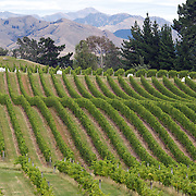 The view of the vineyards in the Marlborough Wine Region from the tower at Highfield Estate WInery,  Brookby Road, Blenheim, Marlborough. New Zealand..Established in 1989, Highfield is a boutique Marlborough winery  owned by Shin Yokoi and Tom Tenuwera. . Highfield is surrounded by a beautiful five acre pinot noir block, situated on the Brookby Ridge and signposted by the iconic tower...The Marlborough wine region is New Zealand's largest wine producer. The Marlborough wine region has earned a global reputation for viticultural excellence since the 1970s. It has an enviable international reputation for producing the best Sauvignon Blanc in the world. It also makes very good Chardonnay and Riesling and is fast developing a reputation for high quality Pinot Noir. Of the region's ten thousand hectares of grapes (almost half the national crop) one third are planted in Sauvignon Blanc. Marlborough, New Zealand, 12th February 2011. Photo Tim Clayton