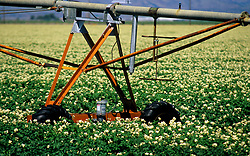 Stock photo of a close up of irrigation machinery in a field of crops