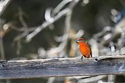 Wildlife photography from Madera Canyon, Arizona, USA