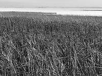 https://Duncan.co/reeds-and-fog
