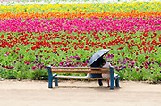 People Sitting On A Bench At The Carlsbad Flower Fields