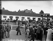 20/09/1955<br /> 09/20/1955<br /> 20 September 1955<br /> Goffs September Bloodstock sales at the RDS, Ballsbridge Dublin. Image shows the sales Paddock with horses in the ring viewed by potential buyers. Goffs sign on right.