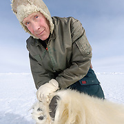 Dr. Steven C. Amstrup checks the paw of polar bear (Ursus maritimus) #20571, a large male that had been tagged years earlier. Kaktovik, Alaska.
