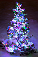 Christmas tree decorated with lights after a snowfall.