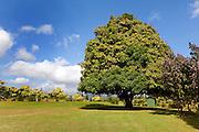 Kukuiolono Park and Golf Course, Kalaheo, Kauai, Hawaii