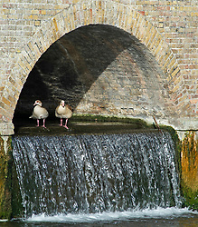 ©Licensed to London News Pictures 29/08/2019.<br /> Sidcup ,UK. Two ducks rest under an arch at Five arches bridge. Early morning sunny weather at Footscray Meadows in Sidcup, South East London.Photo credit: Grant Falvey/LNP