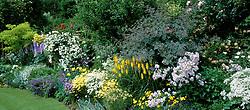Cottage border at Eastgrove Cottage. Kniphofia 'Sunningdale Yellow', Campanula lactiflora 'Loddon Anna', Rosa glauca, nepeta, philadelphus, anthemis and robinia. Design: Carol and Malcolm Skinner