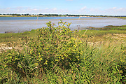 Landscape view of River Deben looking to Waldringfield from Sutton, Suffolk, England, UK