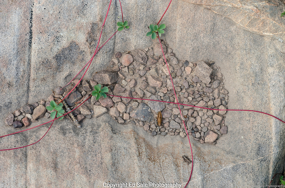 A granite rock in the mountains above Moab, Utah is home to red vines and green plants along with small bugs