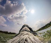 """English Setter """"Rudy"""" trägt am 04.09. 2018 eine """"Action Kamera"""" auf seinem Rücken und fotografiert im Teich von Stara Lysa, (Tschechische Republik).  Rudy wurde Anfang Januar 2017 geboren."""