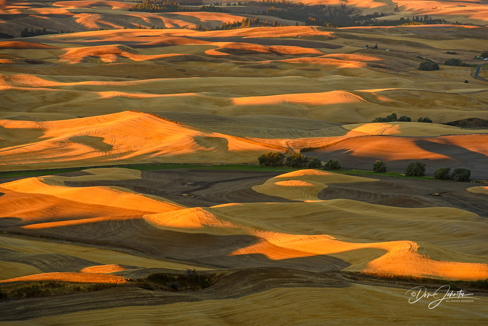 Mowing and harvest patterns in the Palouse landscape at dawn in late summer, Steptoe Butte State Park, Washington, USA