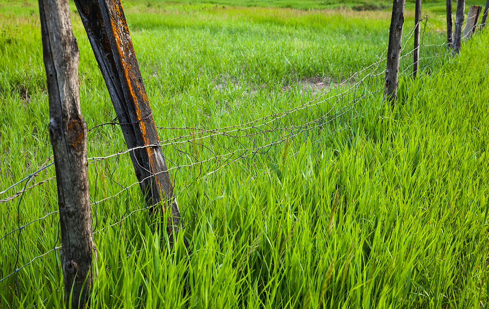 An old fence falling down in a grassy field, Methow Valley, Washington, USA.